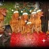Kalėdų dvasia Trio magijos šeimose :)