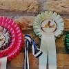 Weekend dog shows and canicross competitions