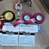 Weekend dog shows